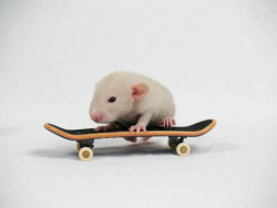 Thumbelina the Beige Dumbo Dwarf Girly! :)   Little Skater girl! :)