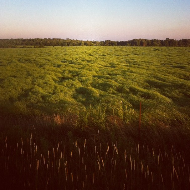 "mpdrolet:  Dreamy landscape in Durham County It seemed like a field of organically flowing grass and reeds and marsh lands, but it kept shifting with the breeze that came and went. Just mind-blowing and a reminder that Nature owns certain parts of my brain. This place was incredible. *version from a ""real"" camera coming soon  Mark Peter Drolet"