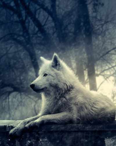 Night of the Wolf by lady-amarillis  If I could be a wild animal, I'd chose to be a wolf. Preferably a white one. Such a beauty.