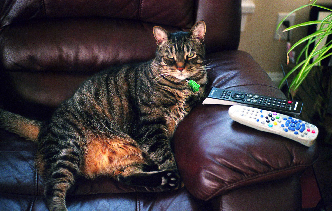 The remotes are mine, human!!!  Leica M6 + Summicron 50 mm f2 Kodak Ultramax 400 developed at Walmart for 5 bucks