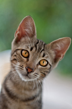 "photogenicfelines:  (via 500px / Photo ""calcetines"" by sevi gadea)"