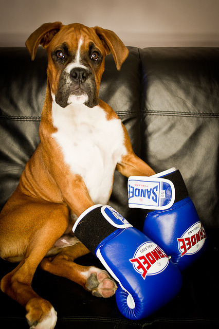 worldlyanimals:  The Boxer (Danny Beattie)