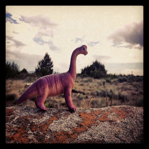 #dinosaur on the way to #paintedhills #centraloregon #oregon #dino #purpledino #rock #sky (Taken with Instagram)