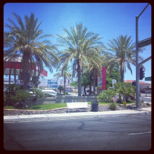 I heart palm trees! #lakehavasu #arizona #love #summer (Taken with Instagram)