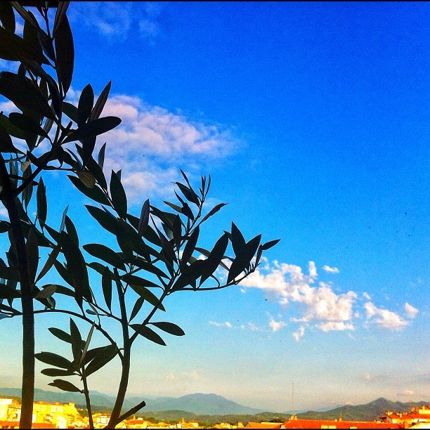 Blue morning #nature #sun #happy #follow #instagramers #instadaily#jj #beautiful #bestoftheday #sky #igdaily #webstagram #picstitch #fashion #nofilter #spain #igersgirona #love #instagood #tweegram #photooftheday #iphonesis #instamood #cute #igers #iphoneonly #picoftheday #instagramhub #tbt #summer » http://instacanv.as/mario_mbr < (tomada con Instagram en Parque Nuevo del Barrio)