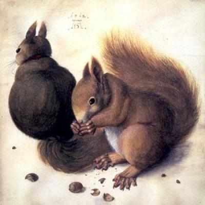 heaveninawildflower:  Squirrels by Albrecht Durer (1471 - 1528). Source - Wikimedia