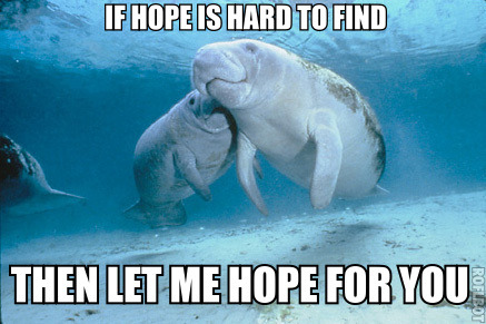 "calmingmanatee:  [Image description: Two manatees are together in the sea, slightly above the camera. One is nuzzling the other's cheek. TOP TEXT: ""If hope is hard to find."" BOTTOM TEXT: ""Then let me hope for you.""]"