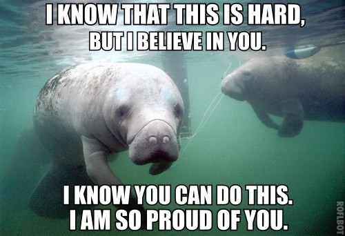"calmingmanatee:  [Image description: A manatee is facing the camera. Some kind of large object is in the background, being checked out by another manatee on the left side of the frame. TOP TEXT: ""I know that this is hard, but I believe in you."" BOTTOM TEXT: ""I know you can do this. I am so proud of you.""]"