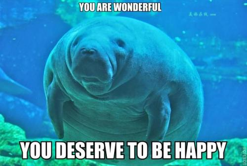 "calmingmanatee:  [Image description: A manatee is almost facing the camera, looking slightly to the left of the frame. It is a very fat and adorable manatee. TOP TEXT: ""You are wonderful."" BOTTOM TEXT: ""You deserve to be happy.""]"
