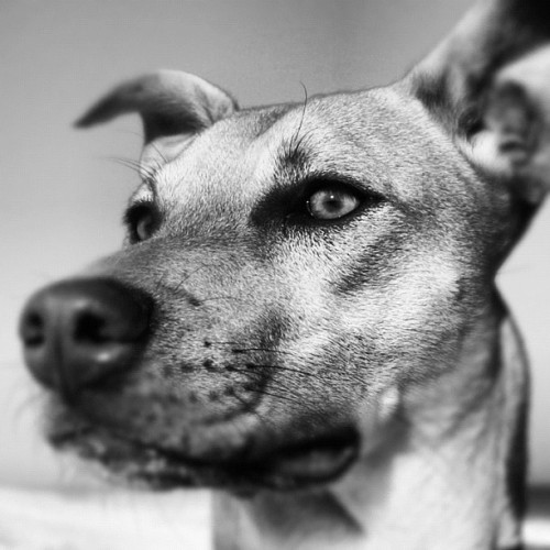 #dog #portrait  (Taken with Instagram)