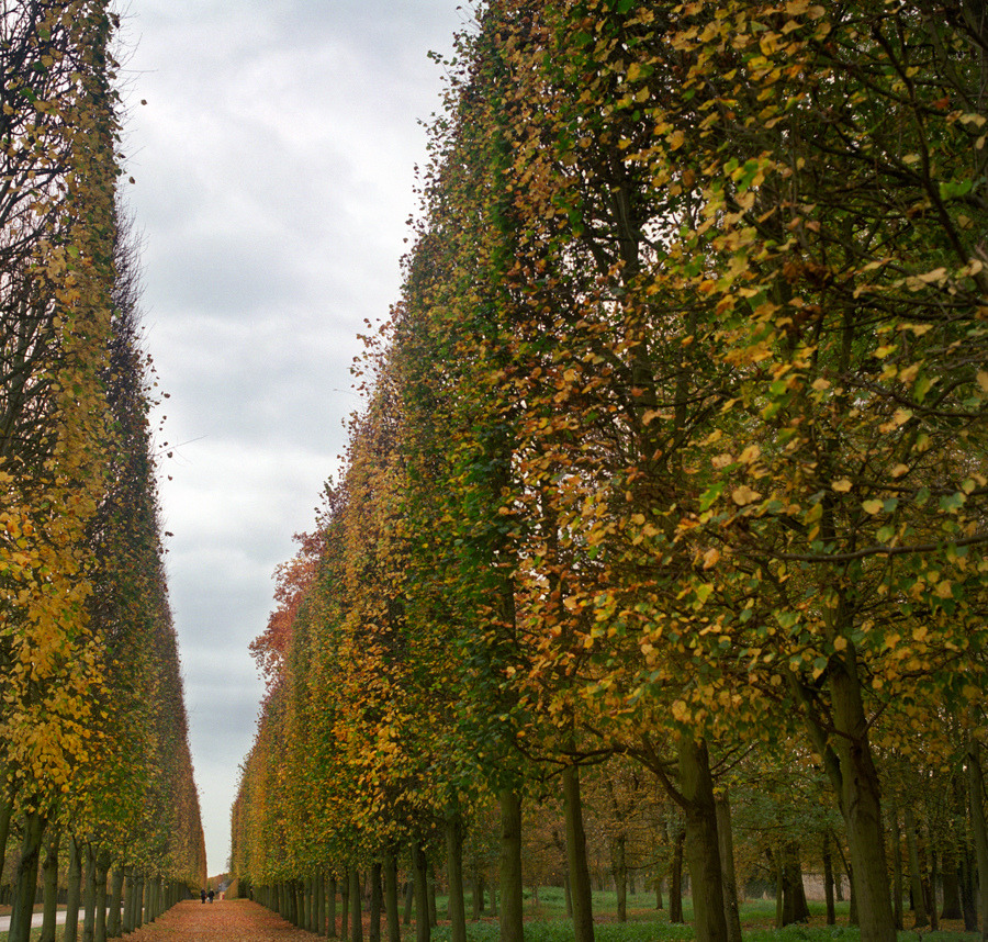Le long de l'avenue de l'automne (by Zeb Andrews)