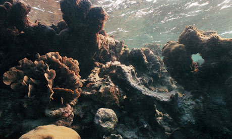 "saveplanetearth:  Rising ocean acid levels are 'the biggest threat to coral reefs': The speed by which oceans' acid levels have risen has caught scientists off-guard, says the head of NOAA @ Guardian Oceans' rising acid levels have emerged as one of the biggest threats to coral reefs, acting as the ""osteoporosis of the sea"" and threatening everything from food security to tourism to livelihoods, the head of a US scientific agency said Monday.The speed by which the oceans' acid levels has risen caught scientists off-guard, with the problem now considered to be climate change's ""equally evil twin,"" National Oceanic and Atmospheric Administration (NOAA) chief Jane Lubchenco told The Associated Press.""We've got sort of the perfect storm of stressors from multiple places really hammering reefs around the world,"" said Lubchenco, who was in Australia to speak at the International Coral Reef Symposium in the northeast city of Cairns, near the Great Barrier Reef. ""It's a very serious situation."" (…)"