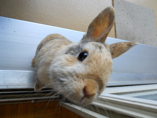 dailybunny:  You're Coming Out to Run Around with Me, Right? Thanks, Ale!