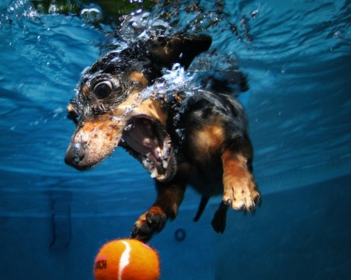 "Photo by @janee in ""Underwater Dogs by Seth Casteel"""
