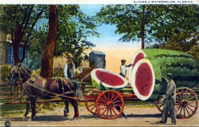 oldflorida:  Watermelons are bigger in Florida.