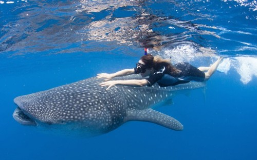 theanimalblog:  Actress Maggie Q swims with a whale shark off Cancun, Mexico to publicize the plight of sharks threatened by demand for shark fin soup.  Picture: Paul Hilton/ WildAid / AFP/GettyImages