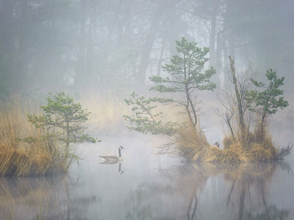 (vía Canada Geese Picture — Bird Photo — National Geographic Photo of the Day)