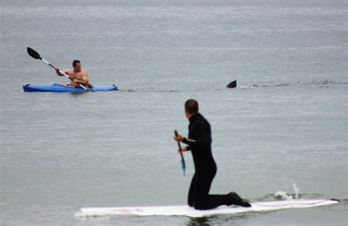 Kayaker has close encounter with a great white shark. Photo: Shelly Negrotti / AP