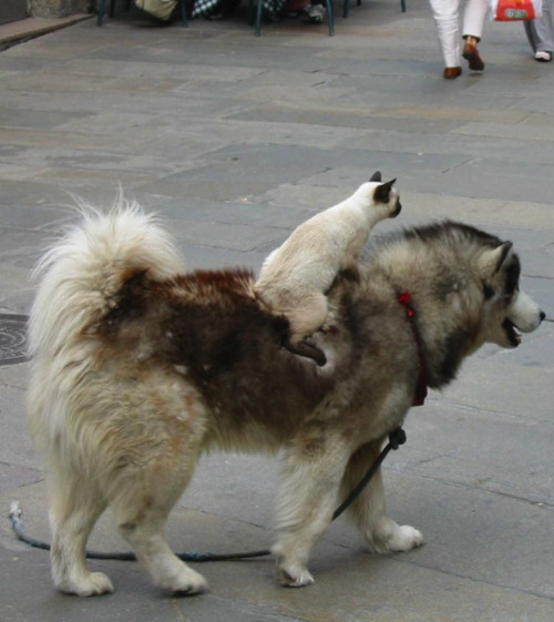 meticulist:  onward noble steed