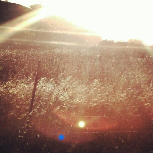 #crops #growing #under #the #beautiful #golden #sun #at #the #gorgeous #and #amazingly #fun #ranch  (Taken with Instagram)