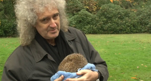 mothernaturenetwork:   'Queen' guitarist turns estate into wildlife refuge Brian May, one of the greatest guitarists of all-time, hopes he's remembered more for his wildlife activism than his music.