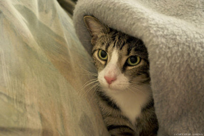 Ozzy under the blanket I by *rockmylife