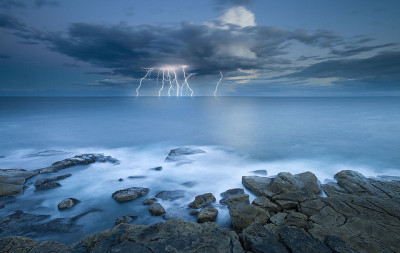 tangledleaves:  Shocking Bondi by Tim Poulton