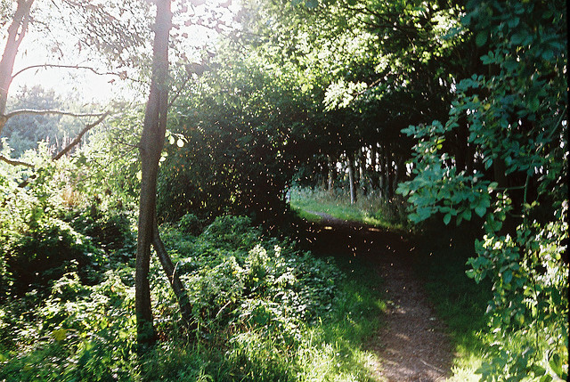 laughingfits:  Path by Vaughan Jones. on Flickr.