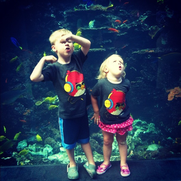 The lovely faces my kids made when I asked them to smile… The GA Aquarium was a blast :) #instagood #instagramer #instagramers #iphonography #photos #popular #photography #picoftheday #art #nature #georgiaaquarium #atlanta #cnnireport  (Taken with Instagram)