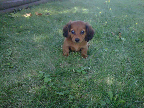 courtneyycatastrophee:  Heyyy Thereee Delilahhhh :) New Puppy <3 herrrr