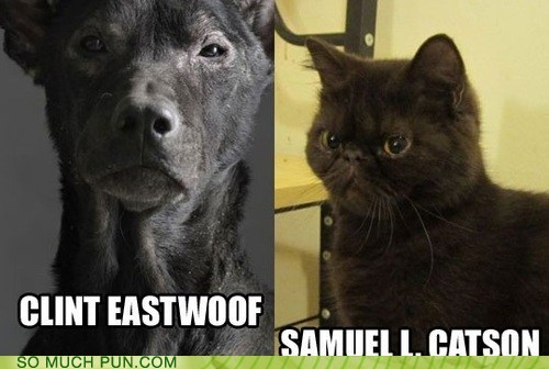 totally-fail:  Two of the Animal Kingdom's Finest Actors http://totally-fail.tumblr.com/