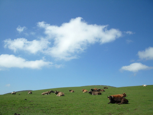 Composition with Fourteen Cows and One Cow by Steven2358 on Flickr.Tramite Flickr: Or is it fifteen? [update] At least fifteen cows were counted in this picture. The title was changed accordingly.