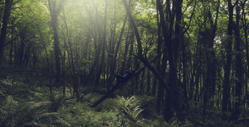 dancingtocaralarms:  Laying in the trees by Patrickeggert on Flickr.