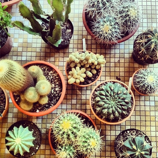Cactus selection for our new store.