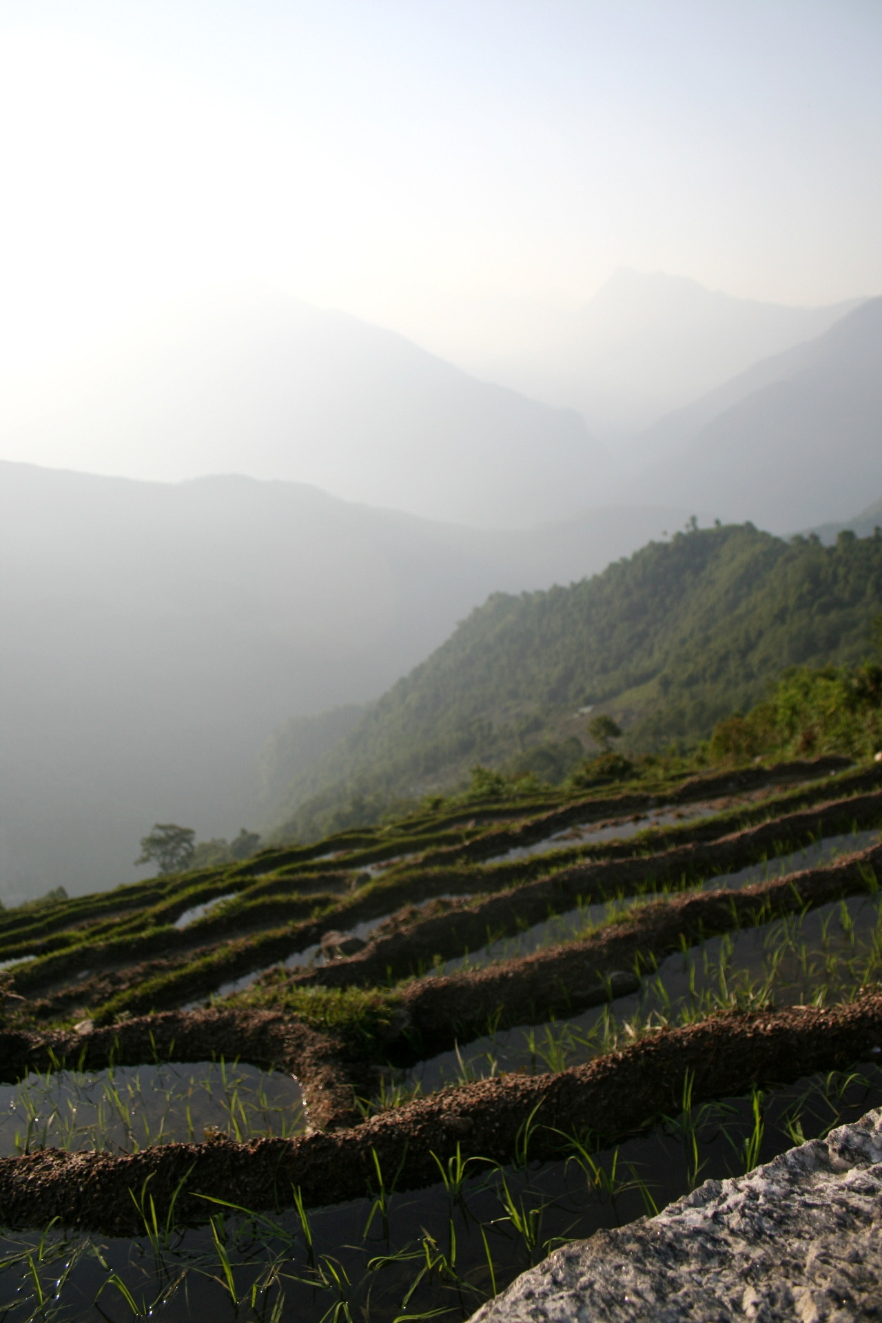 avoidthemundane:  Paddy Fields - Nepal