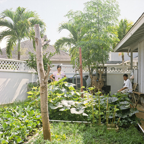 agngarayngay garden 2011 // ewa beach, HI // rolleiflex 2.8e uncle and auntie working the garden early in the morning before we start the day. squash, green onion, okra, green beans, garlic, marungai, rosemary, tangerine scattered throughout this image. every morning we'd be grabbing something from the garden for breakfast. more nature please.