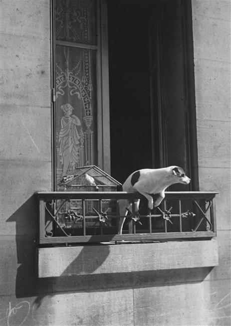 foxesinbreeches:  Le chien concierge by André Kertész, 1926 (from the series La France) Also