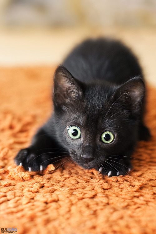 photogenicfelines:  (via ruijoao)