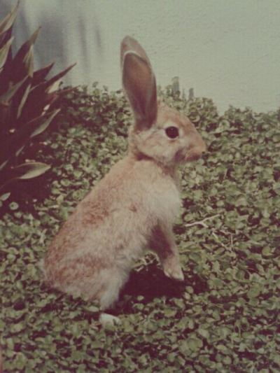 shewasmycatatonicsextoy:  She was the cutest bunny… I miss her so much :(