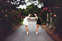 rainyspring:  The Ballerinas by Danielle Pearce on Flickr.