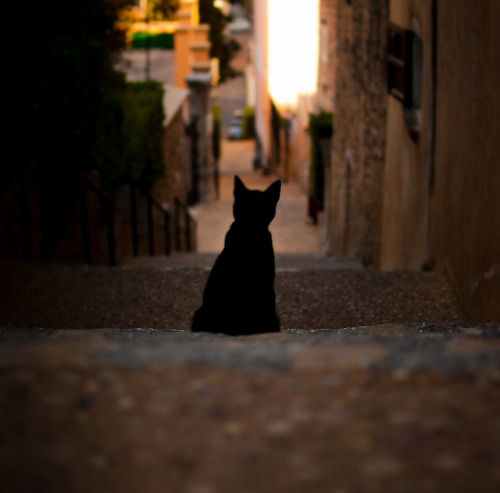 Summercat by Marga Corameta on Flickr.