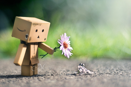 I've alway loved Danbo photos. <2