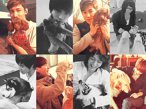 DBSK and animals.