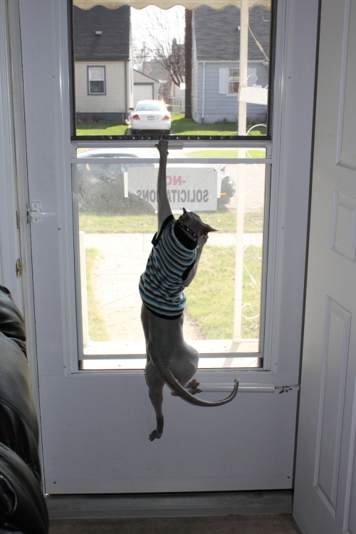 bunnyfood:  (via warrenthesphynx)  A good sweater vest should be able to stretch without losing its shape.