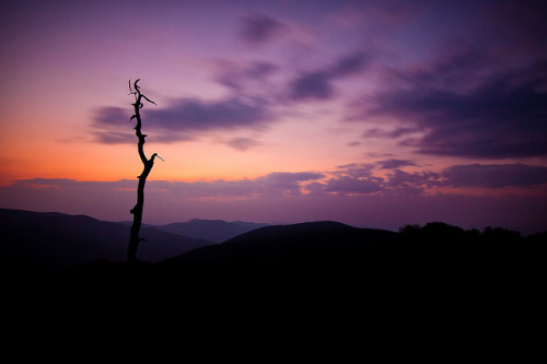 deathtosadness:  Thorofare Mountain Overlook at Dawn by jeffsmallwood on Flickr.