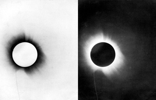 madelineusher:  photo negatives of an eclipse