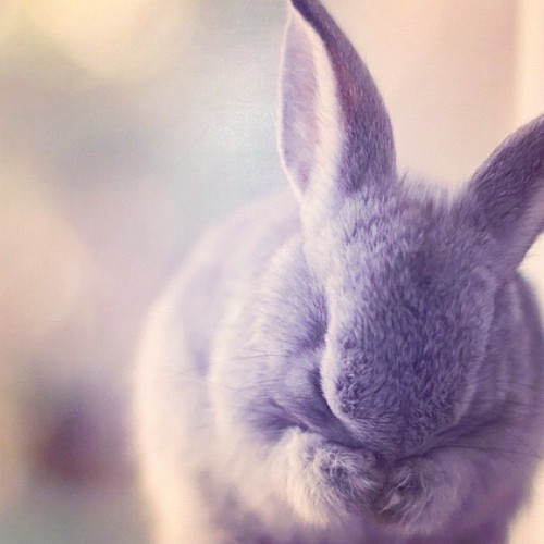 lovewritteninthestars:  Cute Bunny #rabbit #animal  (Taken with Instagram)