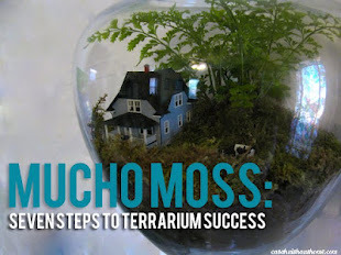 (via casa huis haus home: mucho moss: seven steps to an awesome terrarium in less than an hour)