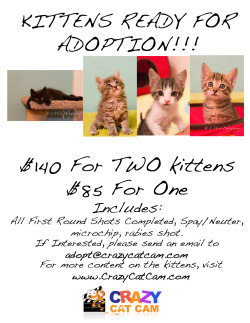Our foster rescue kitties need to find forever homes! We work with non-profit Fat Kitty City and we personally donate all the food, litter, & toys it takes to raise our foster kitties. All proceeds from the adoption fees go to cover the cost of their vet bills to get ready for adoption. Please help us spread the word! Folsom, El Dorado Hills, Sacramento, Roseville,