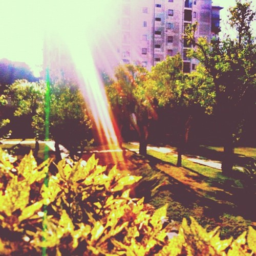 a #secret #sunny #garden ( #colore_italiano #green #sole #colonna_sonora #springsteen #iphonesia #iphoneonly #instagood #instagramers #igersitaly #igers #sunset ) (Scattata con Instagram)